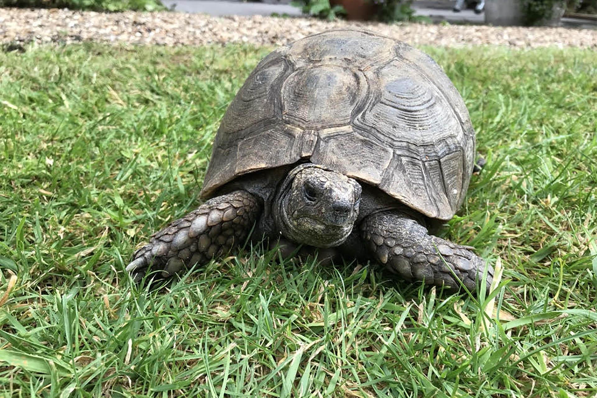 No 8 tortoise